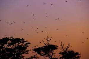 arugam-bay-sunset-birds