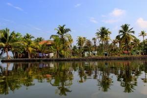 palmiers-reflet-eau-backwaters-kerala-alleppey