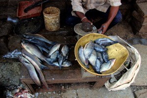 poisson-marche-onde-mysore