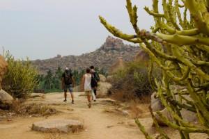 cactus-hampi-desert