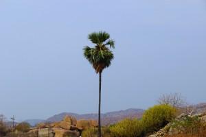 palmier-ciel-bleu