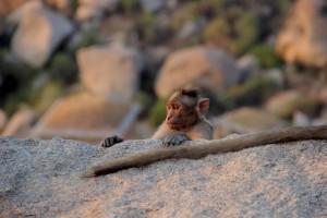 bebe-singe
