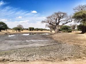 parc-national-tarangire-afrique