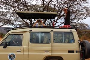 jeep-savane-afrique