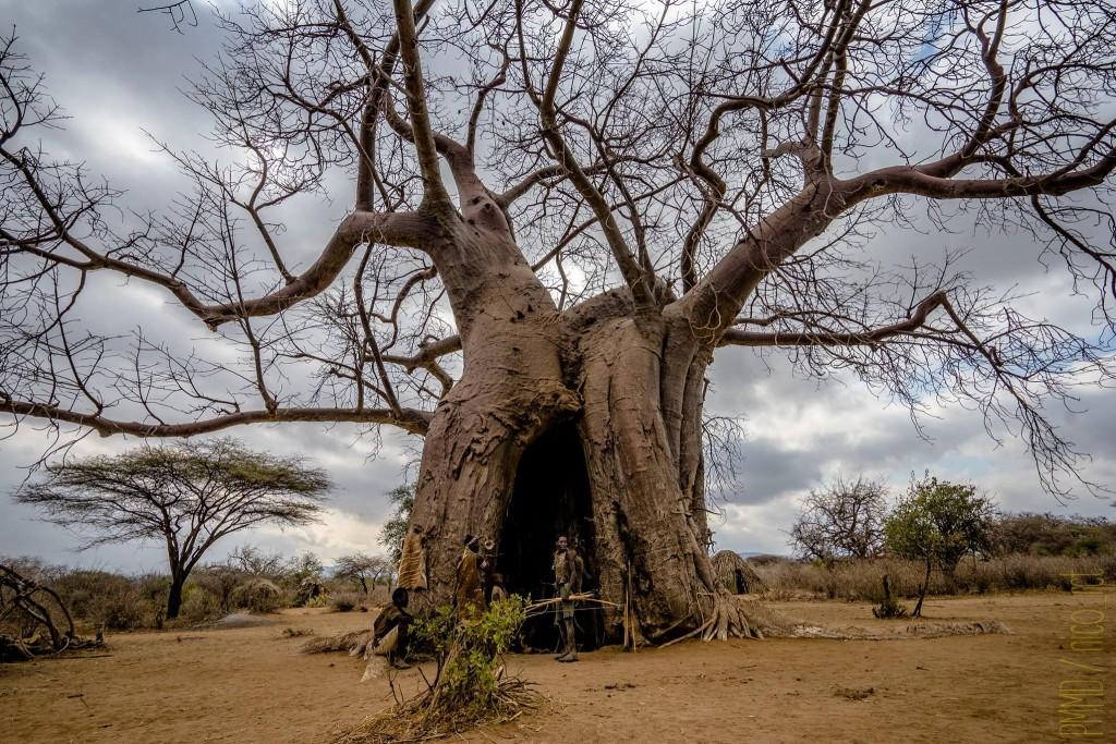 chasse-hadza-tribu-tanzanie