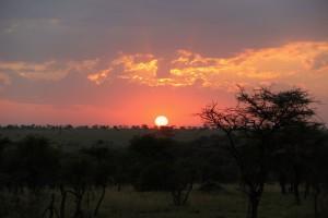 coucher-soleil-savane