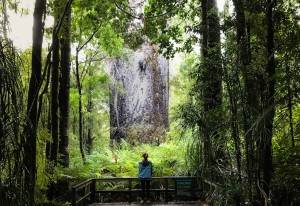 kauri-tree-waipoua-2