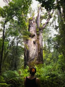 kauri-tree-waipoua-3