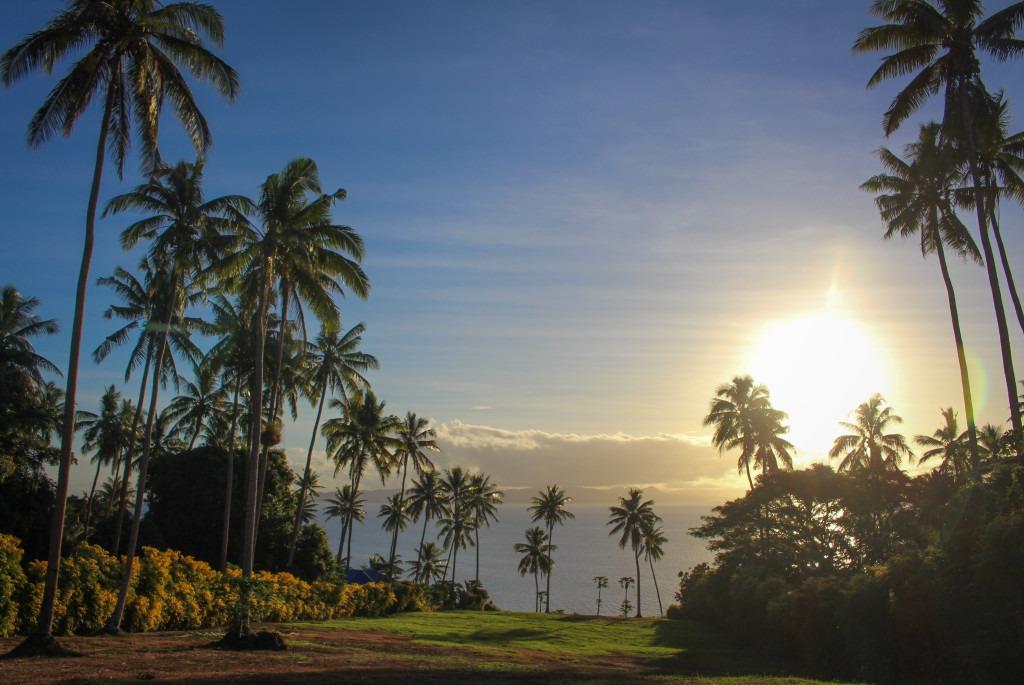 palmiers-iles-fidji-taveuni-jardin